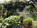 10 Jenis Tanaman Hias Daun Outdoor dengan Bentuk Memesona