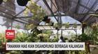 VIDEO: Tanaman Hias Kian Digandrungi Berbagai Kalangan