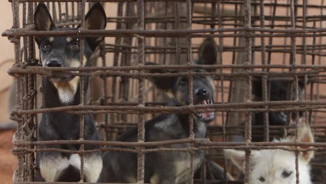 Siam Reap, salah satu provinsi di Kamboja yang terkenal dengan tujuan utama turis asing, Angkot Wat kini menerapkan kebijakan kuliner baru tanpa daging anjing.
