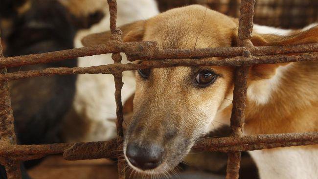 Pemkot Salatiga mengatakan daging anjing tidak termasuk dalam definisi pangan dan berpotensi menyebarkan penyakit zoonotik.