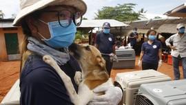 FOTO: Mengakhiri Perdagangan Daging Anjing di Kamboja