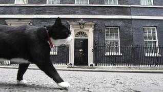 Kucing Palmerston 'Resign' dari Kantor Kemenlu Inggris