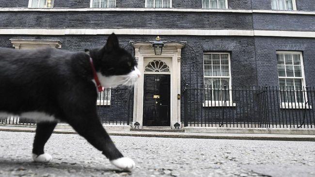 Palmerston, kucing kepala pemburu tikus di Kantor Kementerian Luar Negeri Inggris, memutuskan pensiun dan meninggalkan hingar-bingar kota London.