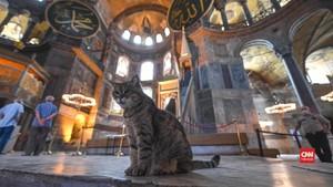 VIDEO: Mengenal Gli, Kucing Imut Penjaga Hagia Sophia