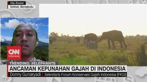VIDEO: Ancaman Kepunahan Gajah di Indonesia