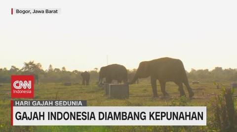 VIDEO: Gajah Indonesia Diambang Kepunahan