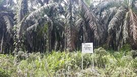 KPK: Kebun Kelapa Sawit Nurhadi yang Disita 530,8 Hektare