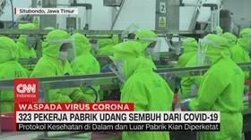 VIDEO: 323 Pekerja Pabrik Udang Sembuh Dari Covid-19