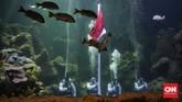 Pengelola Aquarium Utama Sea World Ancol akan melakukan pengibaran Bendera Merah Putih di dalam Air pada HUT RI ke-75. Pengunjung bisa memesan tiket online.