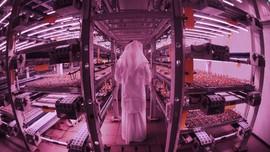 Revolusi Hijau Pertanian Vertikal Dubai