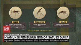 VIDEO: Nyamuk Si Pembunuh Nomor 1 di Dunia