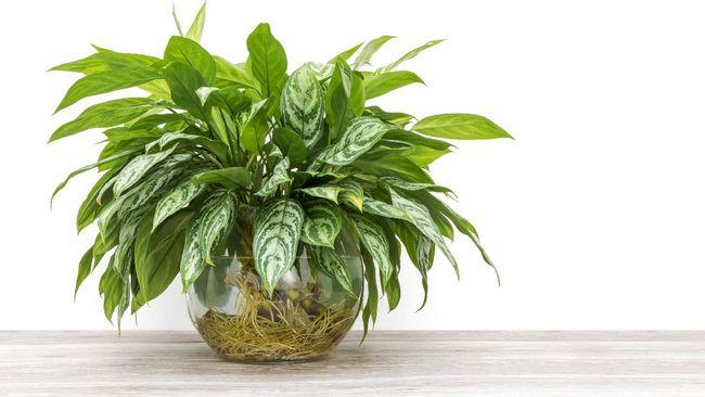 Berikut beberapa ide tanaman hias yang cocok jadi hamper Lebaran.