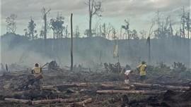 KLHK Gugat 29 Perusahaan Penyebab Kebakaran Hutan dan Lahan