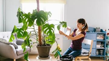 5 Jenis Tanaman Hias Janda Bolong Yang Ngehits Buat Percantik Rumah Bunda
