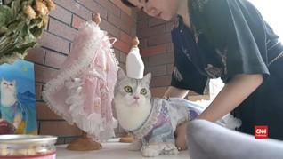 VIDEO: Liu Liu, Kucing lucu Model Busana Tradisional China
