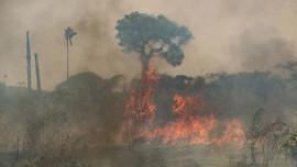 Bank di Dunia Dipaksa Setop Biayai Proyek Perusak Lingkungan