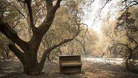 FOTO: Jejak Kehancuran Kebakaran Hutan California