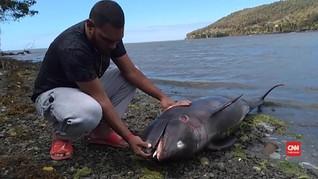 VIDEO: Lumba-lumba Mati Imbas Tumpahan Minyak di Mauritius