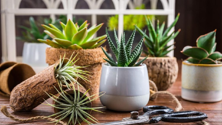 Collection of succulent plants for home deco. Gardening idea for stone garden.
