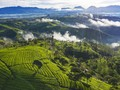 7 Kebun Teh di Jawa Barat untuk Pemburu Pemandangan Hijau