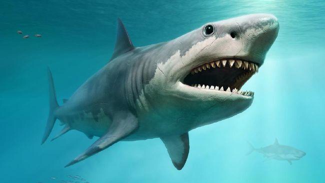 Besarnya ukuran hiu raksasa purba atau dikenal dengan Megalodon akhirnya terungkap oleh ilmuwan dari Inggris.