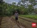 FOTO : Tekanan Petani di Tengah Pandemi Covid-19