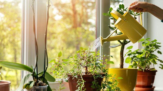 Ada beberapa jenis tanaman hias yang sebenarnya bisa melepaskan oksigen di malam hari dan menyerap karbondioksida.
