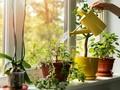 Mengenal 'Serum No Brand Plant', Penumbuh Tanaman yang Viral