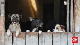 Tantangan Vaksinasi Rabies yang Menurun Selama Pandemi Corona