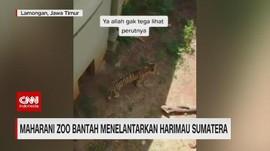 VIDEO: Maharani Zoo Bantah Menelantarkan Harimau Sumatera