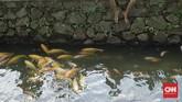 Saluran air atau selokan di kawasan perumahan Pamulang, Tangerang Selatan, diubah warga menjadi kolam hias demi menjadi tempat penyegaran suasana hati.