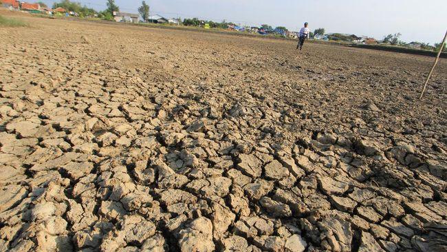 Para petani di Kabupaten Aceh Besar mayoritas bercocok tanam memanfaatkan air hujan sehingga saat kemarau panjang sawah mengalami kekeringan.