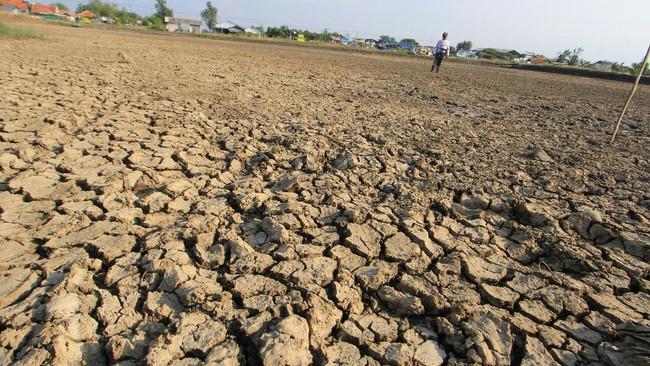 800 Hektare Sawah di Aceh Besar Dilanda Kekeringan