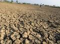 BNPB Nyatakan Sragen Jateng Alami Kekeringan