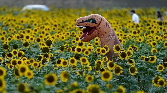 Dalam foto unik pilihan CNNIndonesia.com pekan ini, ada potret ladang bunga matahari, langit yang menguning di Jerman, dan festival musik militer di Rusia.