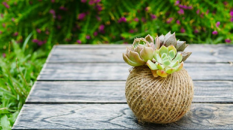 Cute small green succulent plant in rope ball pot on wooden background