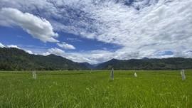Gairah Muda Fikri Kembangkan Pertanian di Kampung Halaman