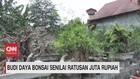 VIDEO: Budi Daya Bonsai Senilai Ratusan Juta Rupiah