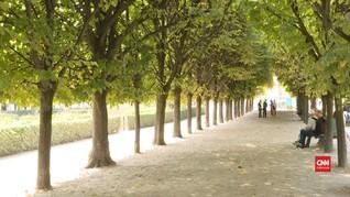 VIDEO: Mendengar Nyanyian Pepohonan di Taman Paris