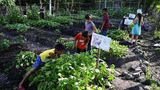FOTO: Siasat Berkebun Anak-anak El Salvador Cegah Kelaparan