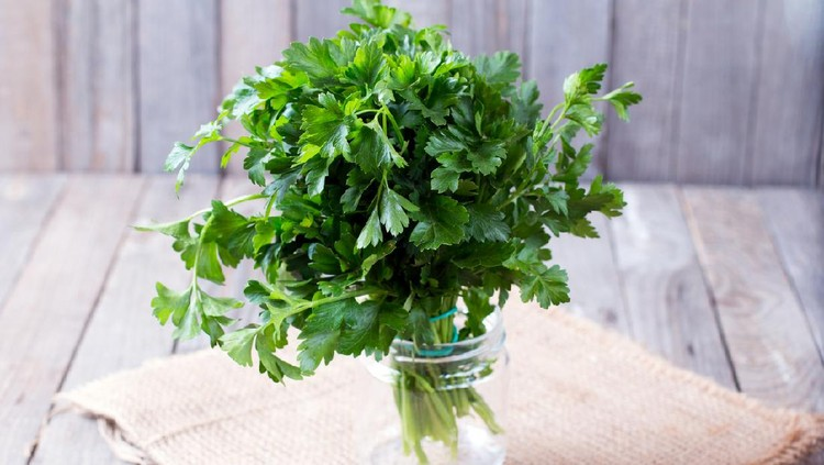 Fresh green parsley on the wooden table