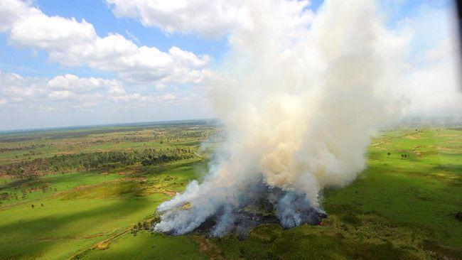 LSM mendesak pemerintah tetap melindungi hutan dari kebakaran karena lahan yang tersisa 9,4 juta hektare walaupun ada pandemi corona.