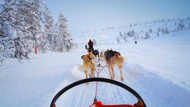 Finlandia, yang berpromosi sebagai kampung halaman Sinterklas, sedang khawatir kehilangan turis pada musim dingin ini akibat pandemi virus corona.