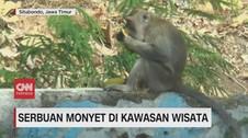 VIDEO: Serbuan Monyet di Kawasan Wisata Situbondo
