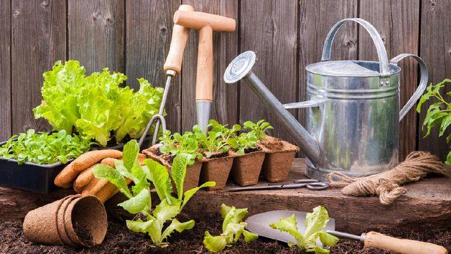 Beragam pilihan peralatan berkebun bisa jadi membingungkan penghobi kebun pemula. Berikut rekomendasi alat berkebun bagi pemula dan cara merawatnya.