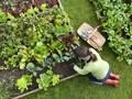 Cara Berkebun Sayuran di Rumah Berlahan Sempit