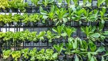 Belajar Pertanian Sekaligus Wisata Kebun di AER Ragunan