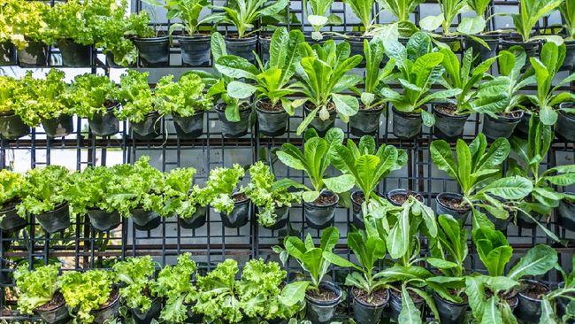 Pemerintah Provinsi DKI Jakarta resmi membuka Agro Eduwisata Ragunan (AER) sebagai tempat untuk belajar pertanian sekaligus berwisata.