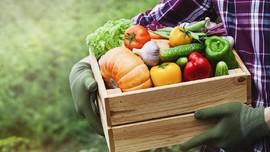 Cara Menanam Sayur Organik di Rumah bagi Pemula