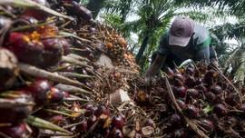 Nilai Ekspor Minyak Sawit Naik di Tengah Pandemi Corona